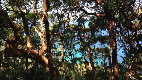 Bushwalkers attacked by dogs in Illawarra escarpment: reports